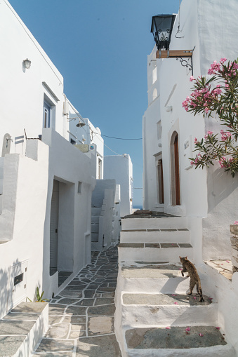 ノスタルジック「Cat climbing stairs beside pathway winding through traditional white Greek houses, framed by old street light and flowers, Kastro Village, Sifnos (famed for its many cats), Cyclades Islands, Greece」:スマホ壁紙(4)