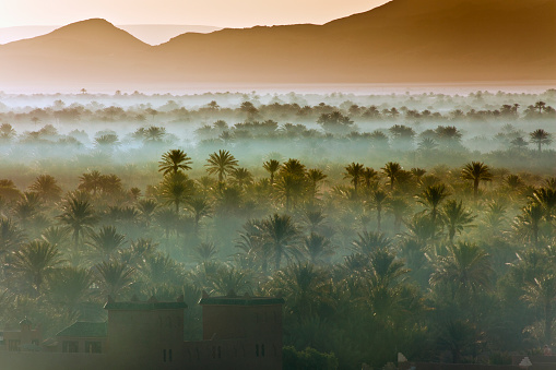 Twilight「Morocco, near Zagora, Sunrise over Oasis and Palm Trees」:スマホ壁紙(18)