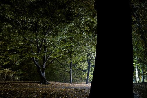 おとぎ話「森の木の照明が輝きで夜」:スマホ壁紙(12)
