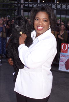 犬「Oprah Winfrey's Personal Growth Summit」:写真・画像(16)[壁紙.com]