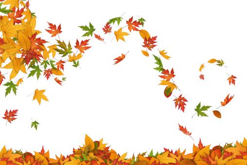 Maple Leaf「Spinning In The Wind」:スマホ壁紙(0)