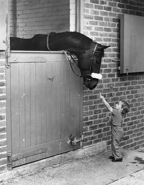 Affectionate「Horse And Child」:写真・画像(9)[壁紙.com]