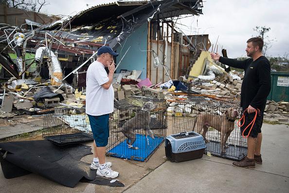 Animal「Hurricane Michael Slams Into Florida's Panhandle Region」:写真・画像(19)[壁紙.com]