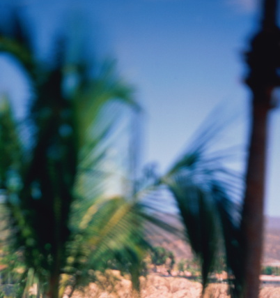 Palm tree「Mexico, Baja California, Cabo San Lucas, Bahia Chileno, palms trees」:スマホ壁紙(12)