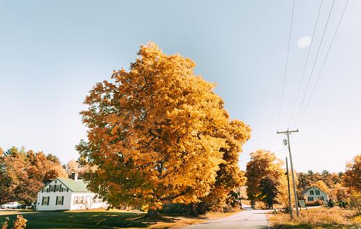 Maple Leaf「orange autumn tree in maine」:スマホ壁紙(17)