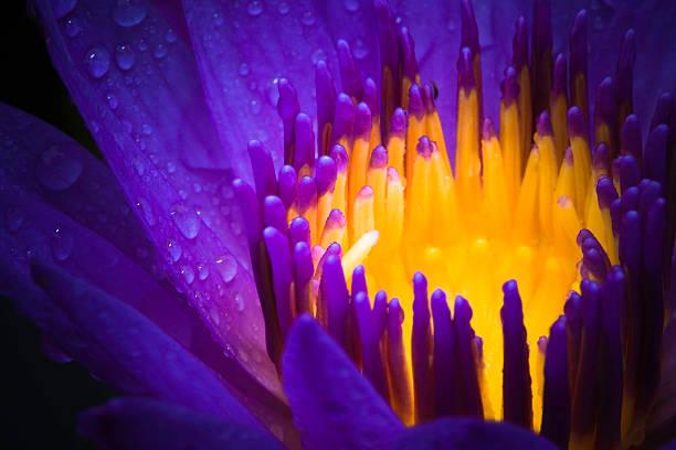 water lily use night color:スマホ壁紙(壁紙.com)