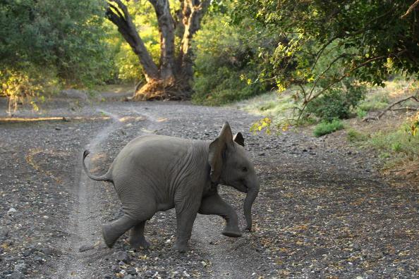 Botswana「An African Safari」:写真・画像(5)[壁紙.com]