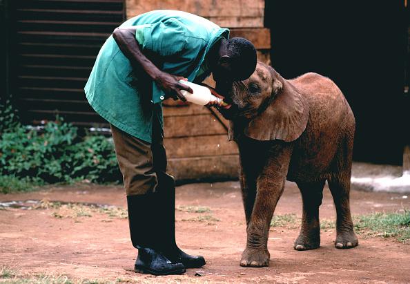 Tom Stoddart Archive「Poachers」:写真・画像(15)[壁紙.com]