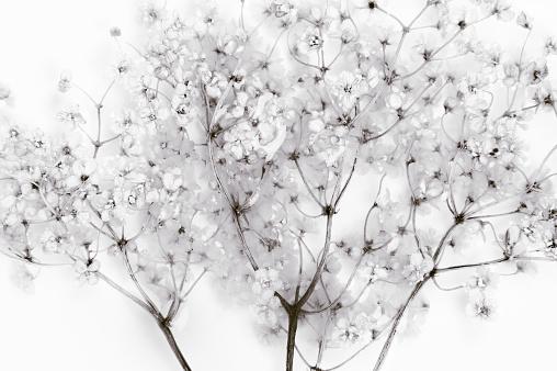 Branch - Plant Part「Elderflower infusion」:スマホ壁紙(16)
