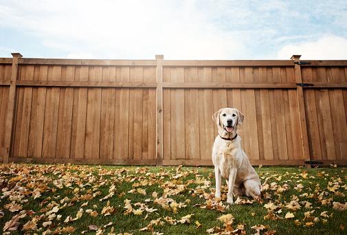 秋「町のかわいい犬」:スマホ壁紙(4)