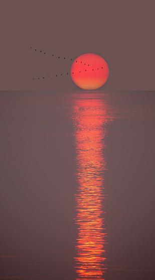 Flock Of Birds「Summer sunrise with migrating birds.」:スマホ壁紙(18)