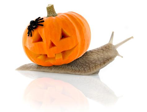 カタツムリ「Halloweensnail」:スマホ壁紙(13)