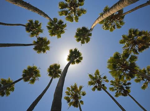 Miami Beach「マイアミ、パームトリー(XXXL )」:スマホ壁紙(4)