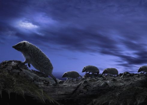 Hedgehog「Family of hedgehogs on tree trunk, side view, dusk (Digital Composite」:スマホ壁紙(6)
