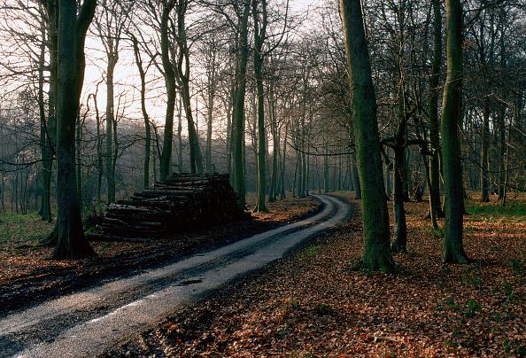 Footpath「Chiltern Hills, Buckinghamshire」:写真・画像(2)[壁紙.com]