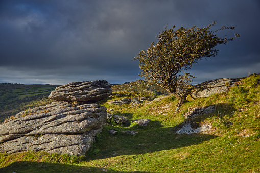 Tousled Hair「Granite boulder and a hawthorn tree on the summit of Bench Tor, in Dartmoor National Park, Devon, Great Britain」:スマホ壁紙(5)