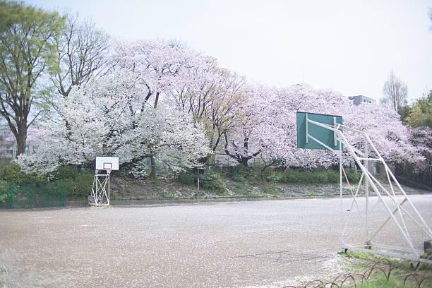 Schoolyard of spring, Basketball court:スマホ壁紙(壁紙.com)