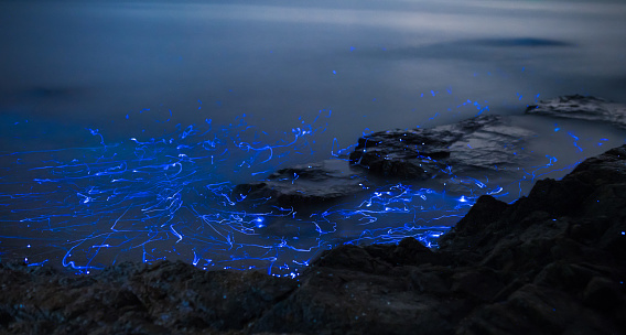 Animal Wildlife「Light trails from bioluminescent sea fireflies floating in the ocean.」:スマホ壁紙(2)