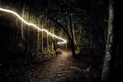 Exploration「Light trail through forest」:スマホ壁紙(10)