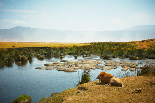 National Recreation Area「Resting male lion, in side view, with hippo filled watering hole and female lion in background in Ngorongoro Crater, Tanzania」:スマホ壁紙(16)