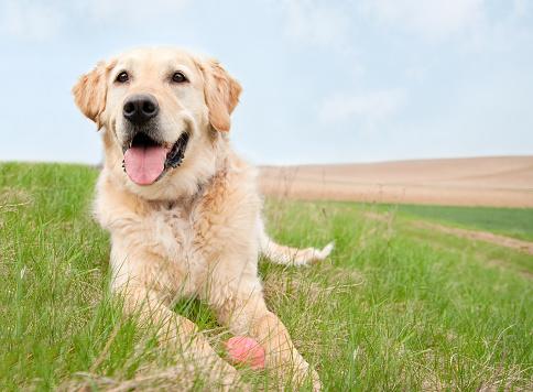 Playing「Dog on a meadow」:スマホ壁紙(13)