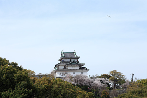 Grove「Wakayama Castle」:スマホ壁紙(6)