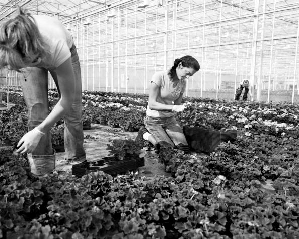 Tom Stoddart Archive「European Agriculture」:写真・画像(10)[壁紙.com]