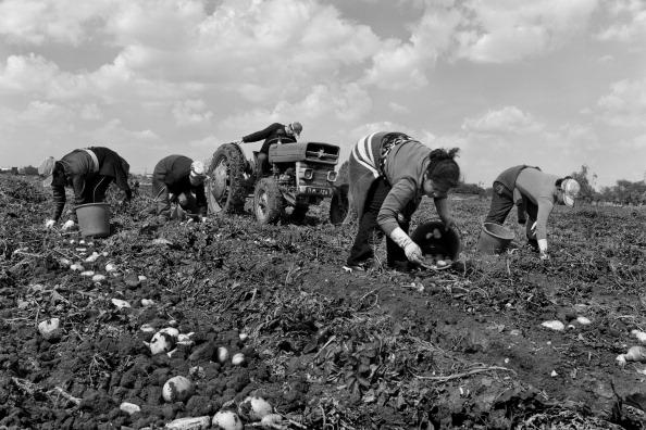 Tom Stoddart Archive「European Agriculture」:写真・画像(17)[壁紙.com]