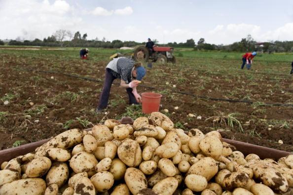 Harvesting「Sotira, Cyprus」:写真・画像(1)[壁紙.com]