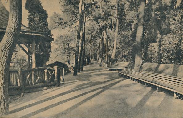 Bench「The Pine Walk」:写真・画像(14)[壁紙.com]