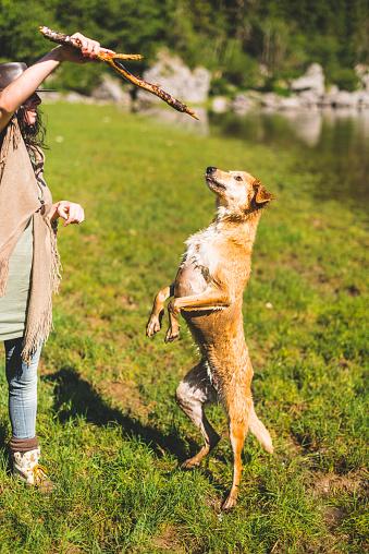 アケビ「山で犬と遊ぶ女性」:スマホ壁紙(17)