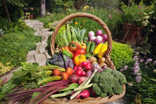 ニンジン「夏の収穫された新鮮な野菜の種類の庭園にバスケット Hz」:スマホ壁紙(3)