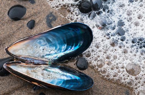 Cannon Beach「Waves Wash Over A Blue Mussel (Mytilus Edulis) Shell On The Beach」:スマホ壁紙(11)