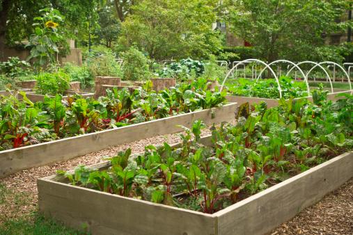 ひまわり「都会のコミュニティ庭園」:スマホ壁紙(14)