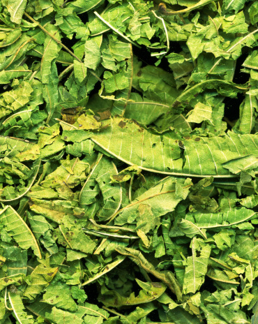 Lemon Verbena「Crushed lemon verbena leaves (Aloysia triphylla)」:スマホ壁紙(18)