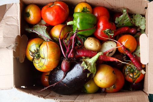 Pennsylvania「harvest of vegatables from garden」:スマホ壁紙(19)