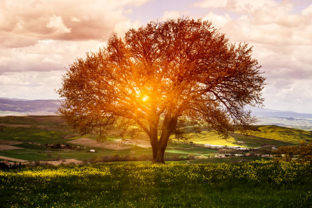 Tree in Flower Field, Spring Sunrise:スマホ壁紙(壁紙.com)