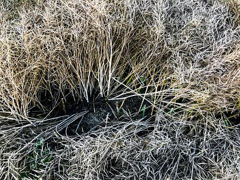 Run Over「A crop field of dried rapeseed」:スマホ壁紙(13)