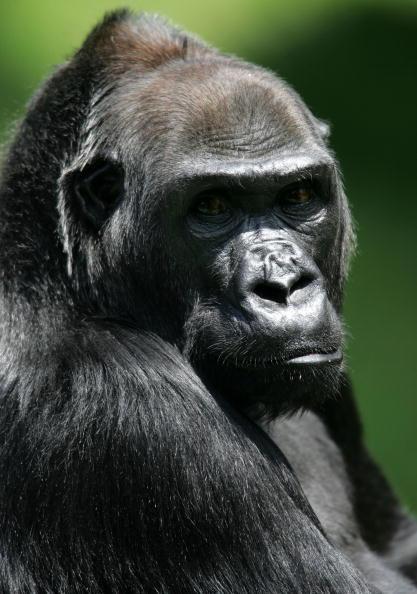 Endangered Species「San Francisco Zoo Celebrates Endangered Species Day」:写真・画像(14)[壁紙.com]