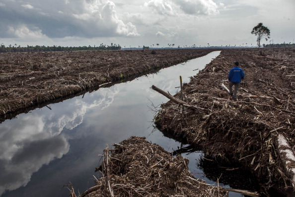 Amazon Rainforest「Indonesia's Deforestation Rate Becomes Highest In The World」:写真・画像(17)[壁紙.com]