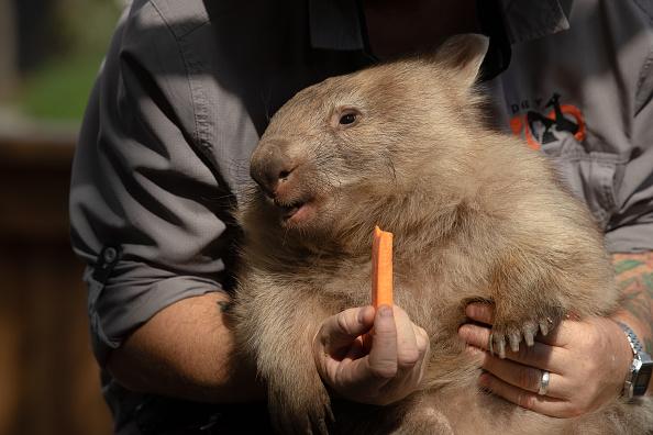 Carrot「Behind The Scenes At Sydney Zoo」:写真・画像(17)[壁紙.com]