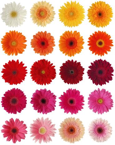 Pink Color「ガーバーの XXXL シリーズ」:スマホ壁紙(3)