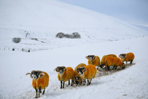 Danger「Yellow Snow Warning Still In Place For Southern Scotland」:写真・画像(7)[壁紙.com]