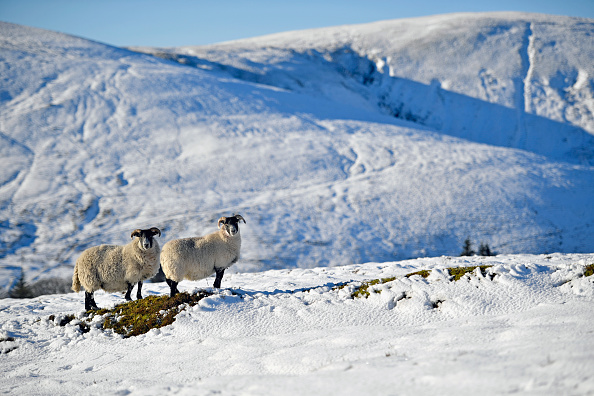 雪「Weather Hits Sub-Zero Temperatures Across Parts Of The UK」:写真・画像(8)[壁紙.com]