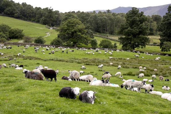 English Lake District「Lake Derwentwater, Lake District, England」:写真・画像(19)[壁紙.com]