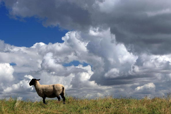 農村の風景「Cattle Market Cancelled To Constrain Foot and Mouth Spread」:写真・画像(14)[壁紙.com]