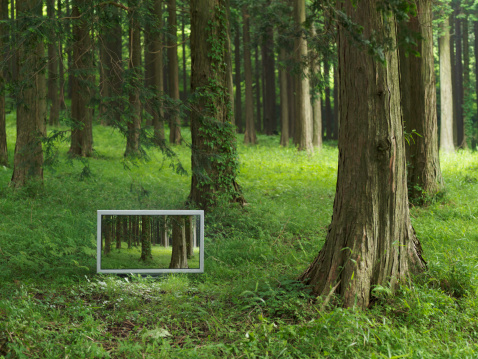Digital Composite「Flat TV placed in the forrest」:スマホ壁紙(12)