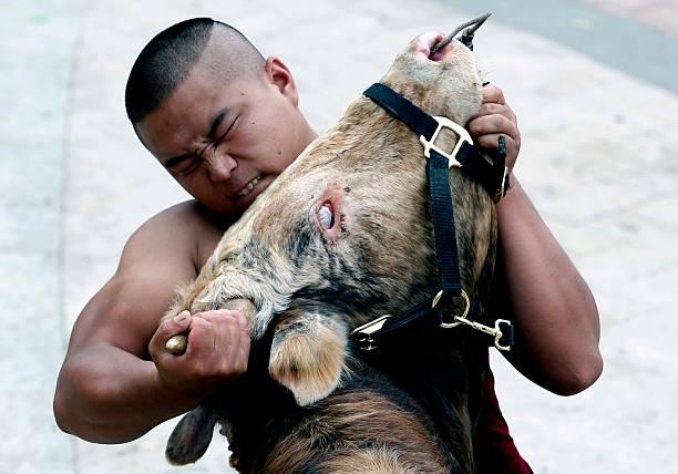 Bull Fighting In Jiaxing:ニュース(壁紙.com)
