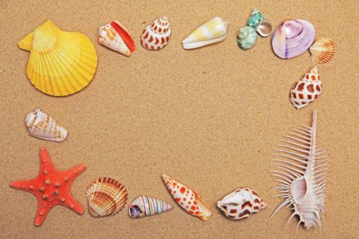 貝殻「Sea shell」:スマホ壁紙(17)