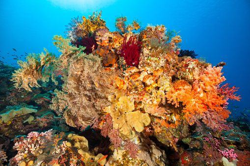 Shallow「Biodiversity Festival, Beautiful Bolder, Coral Reef of Pura Island, Indonesia」:スマホ壁紙(7)